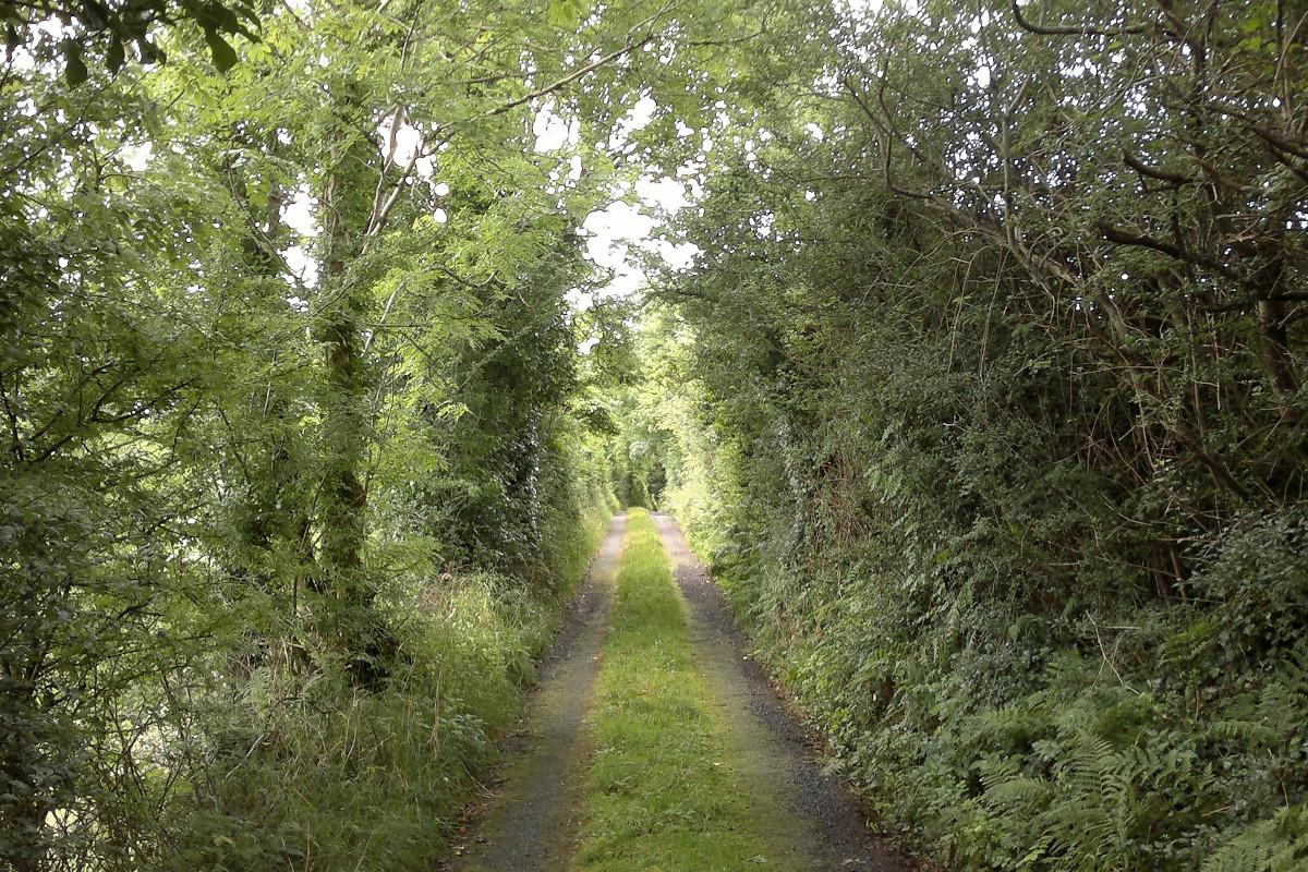 Highwood Loop Walk