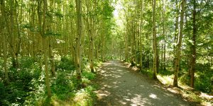 Tubbercurry Forest Trail