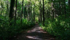 Woodland Sligo