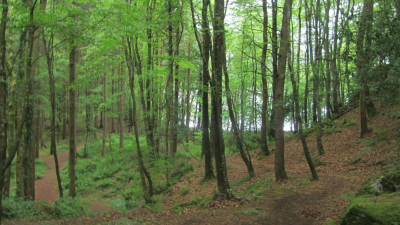 Forest Walks to take this Autumn In Sligo